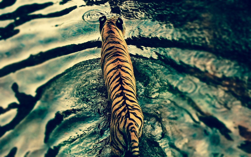 banner2 ripples
